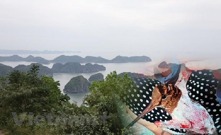bao-ve-cac-loai-dong-vat-hoang-da-vi-ngoi-nha-chung-da-dang-sinh-hoc-2